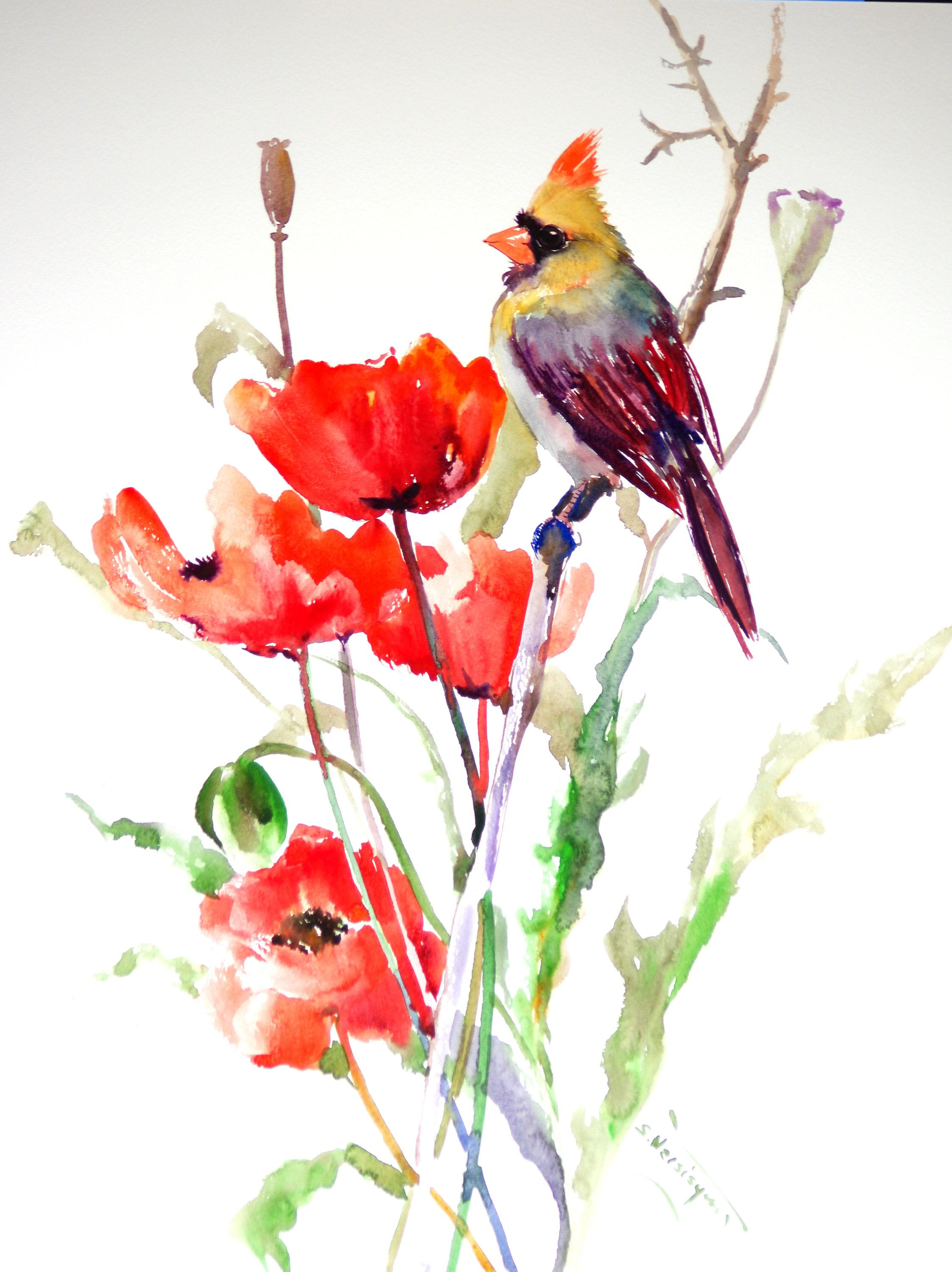 Cardinal clipart kingston. Female and poppies bird