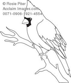 How to draw a. Cardinal clipart line drawing