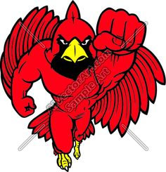 Cardinal clipart mascot. Image of with muscles
