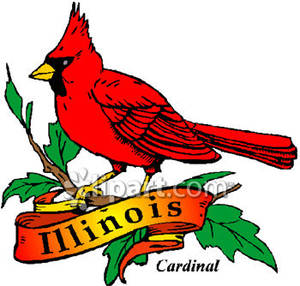 Gold illinois banner with. Cardinal clipart northern cardinal