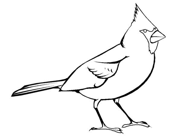 Cardinal clipart outline. Free pictures to color