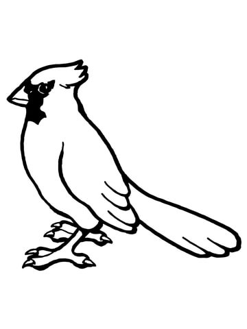 Cardinal clipart printable. Nothern bird coloring page