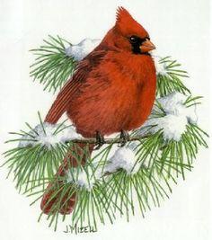 Free winter clip art. Cardinal clipart printable