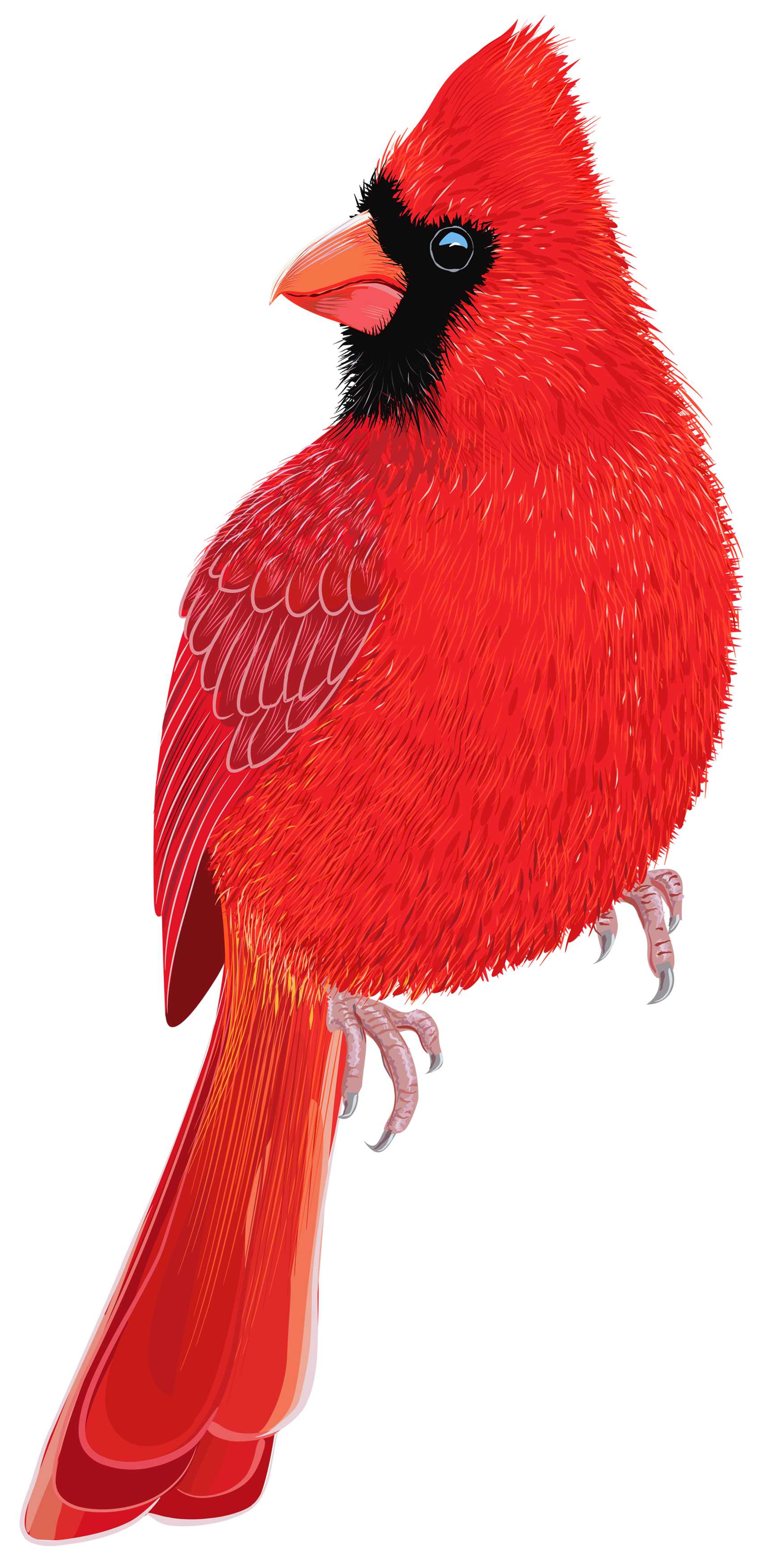 Png image best web. Cardinal clipart red bird