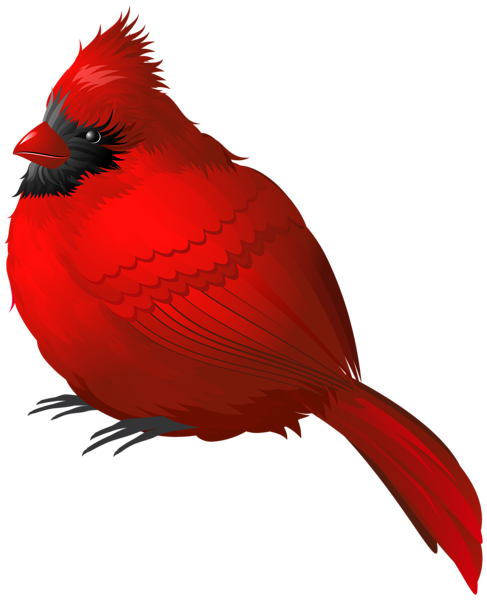 Red Winter Bird PNG Clipart Image