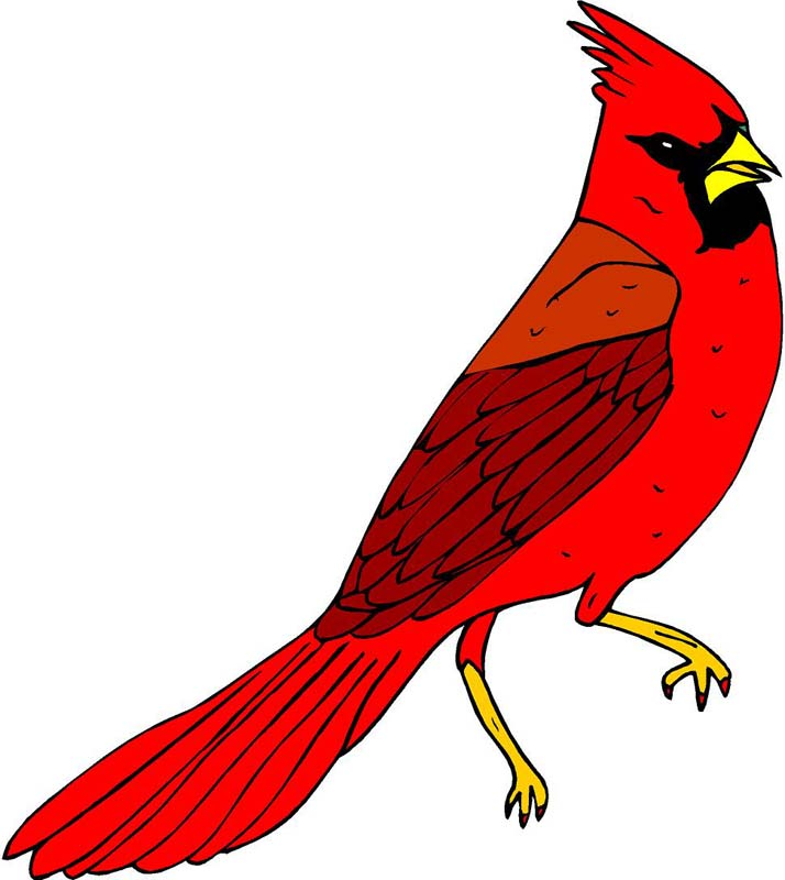 Free download best on. Cardinal clipart red bird
