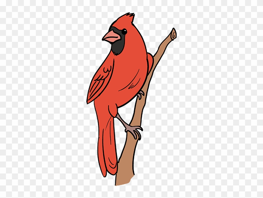 Cardinal clipart red bird. How to draw cartoon