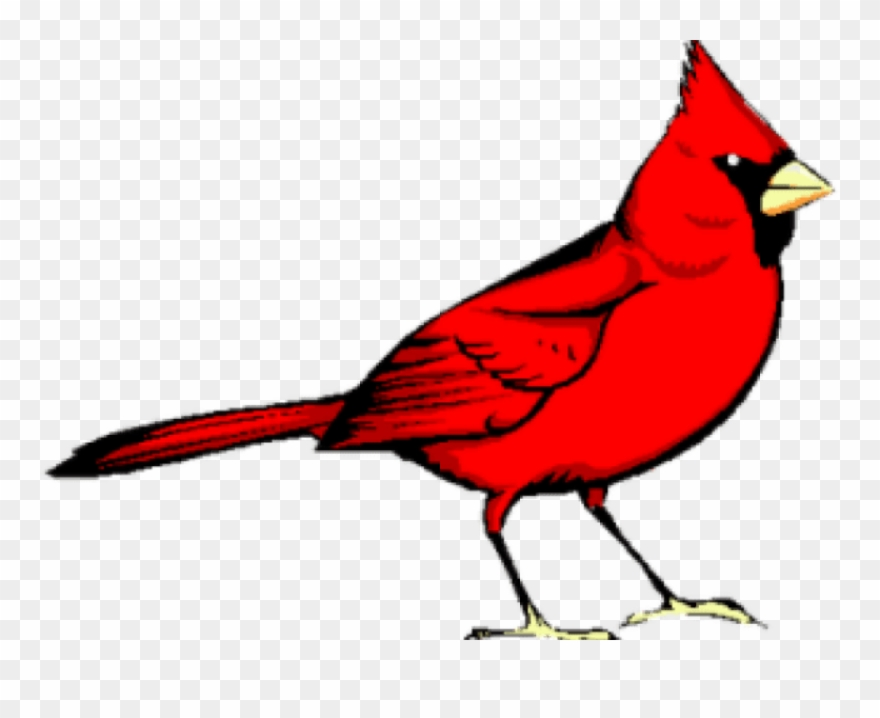 Graphic freeuse library png. Cardinal clipart red bird