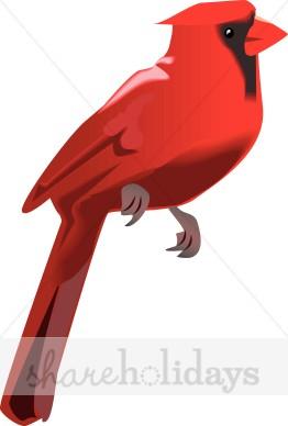 Winter wildlife. Cardinal clipart snow clipart