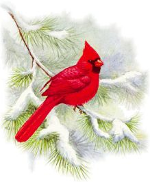 Christmas male and female. Cardinal clipart snow clipart