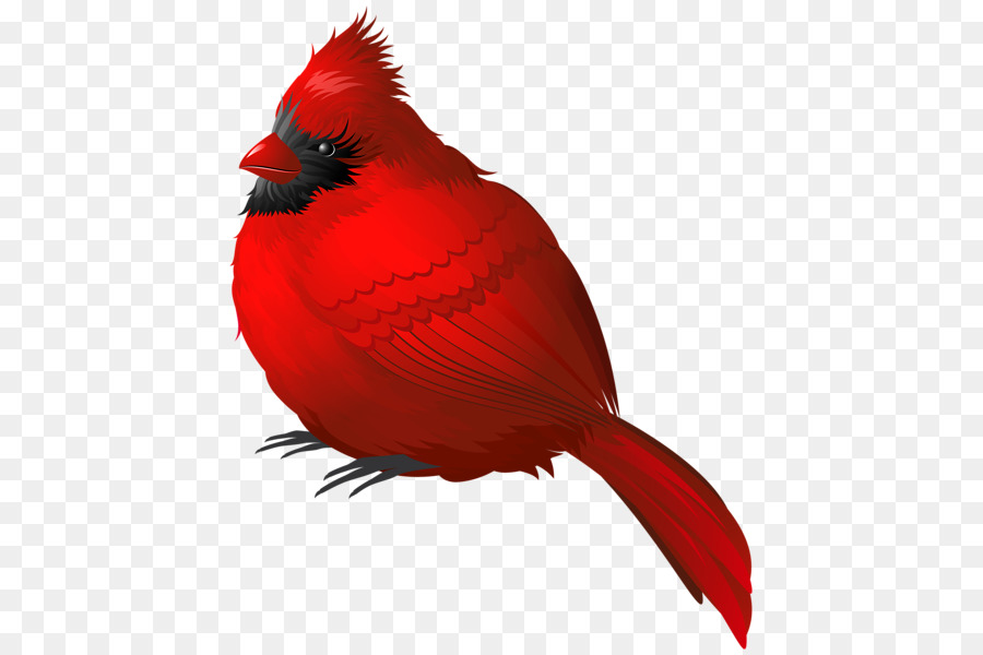 Songbird northern clip art. Cardinal clipart song bird
