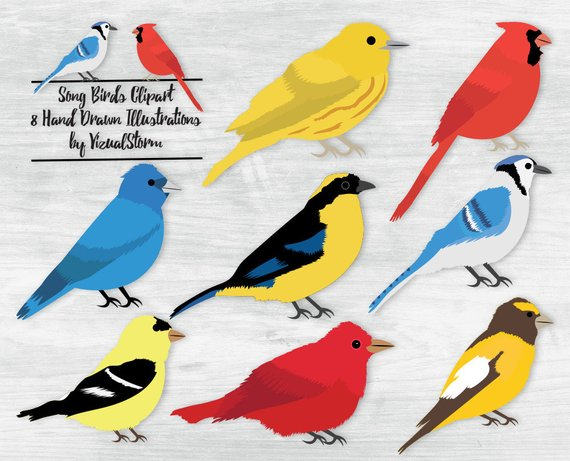 Cardinal clipart song bird. Songbird nature illustrations birds