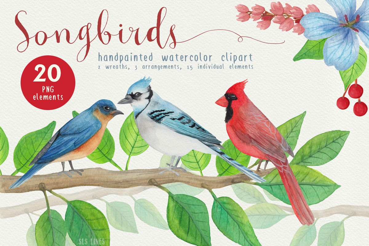 Birds watercolor by sal. Cardinal clipart song bird