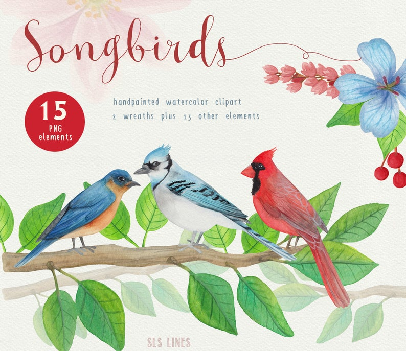 Watercolor graphics for commercial. Cardinal clipart song bird