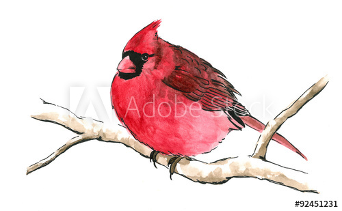 Red perched on branch. Cardinal clipart song bird