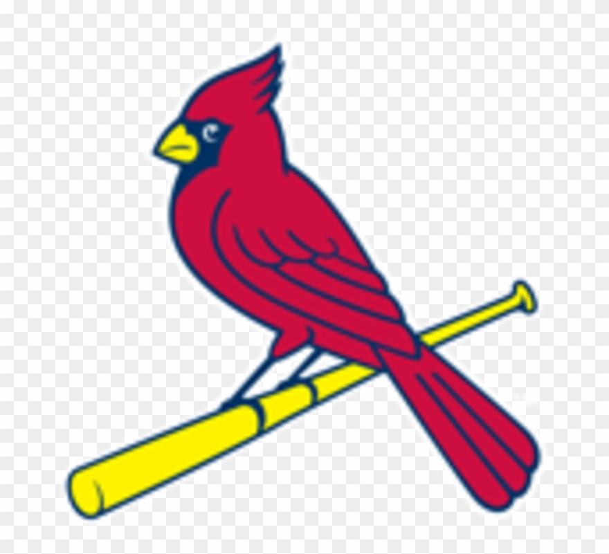 Cardinal clipart st louis cardinals. Bird on bat pinclipart