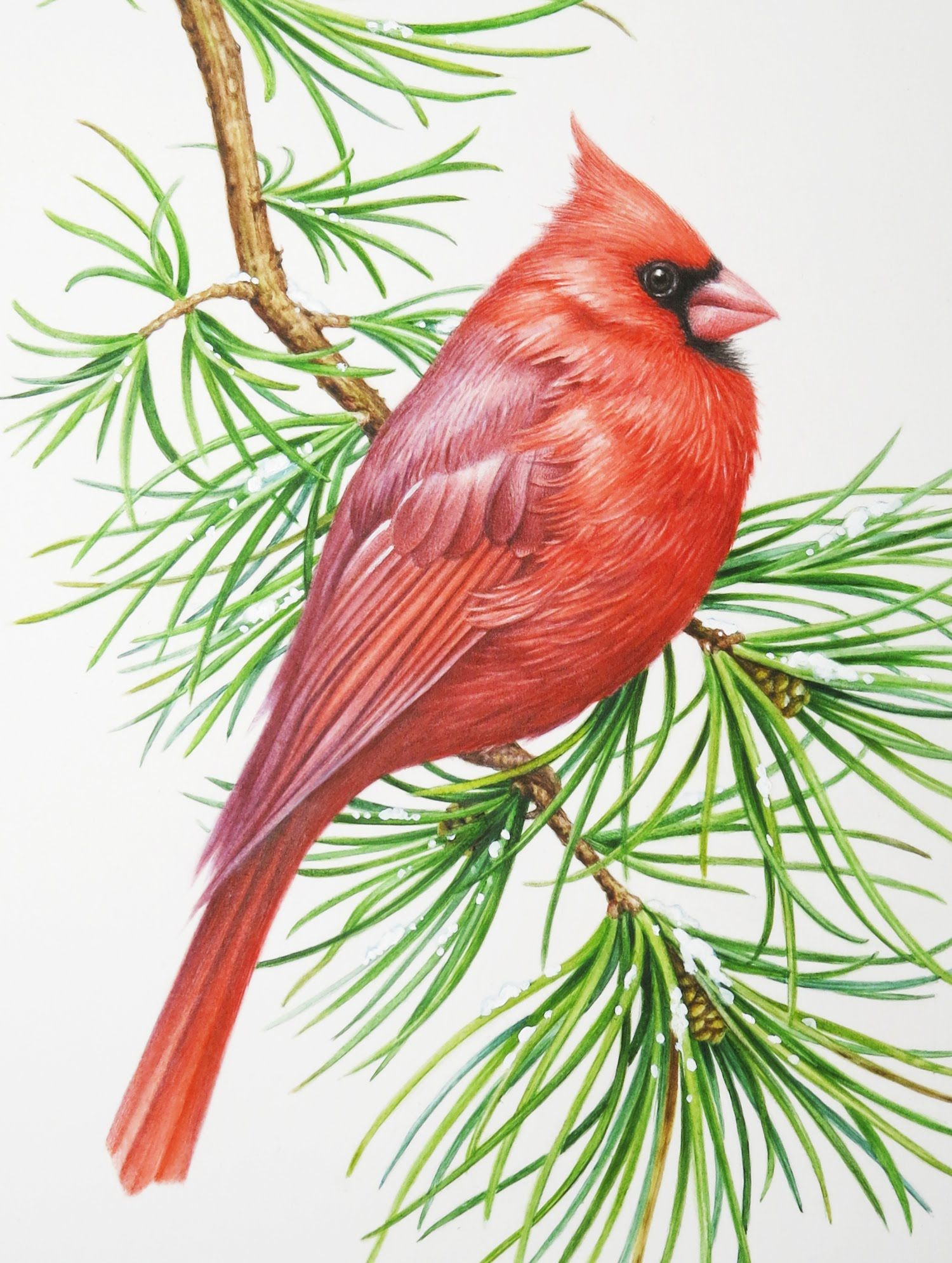 Cardinal clipart tiny bird. Here is a fat