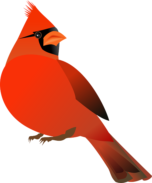 Free image on pixabay. Nest clipart bird feed