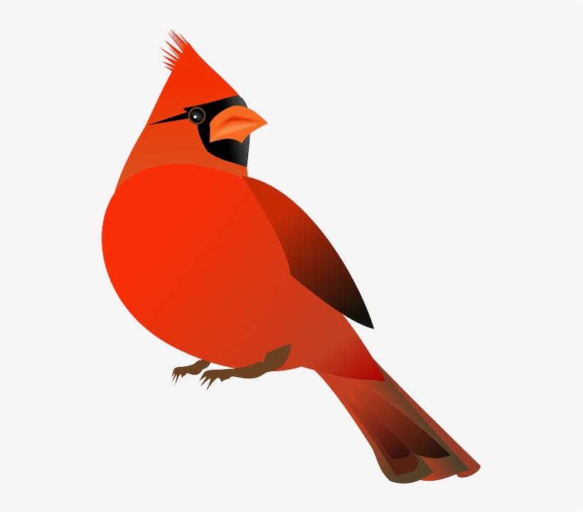Free bird . Cardinal clipart transparent background