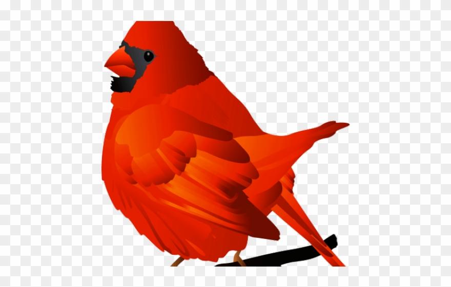 Cardinal clipart transparent background. Clip art png download