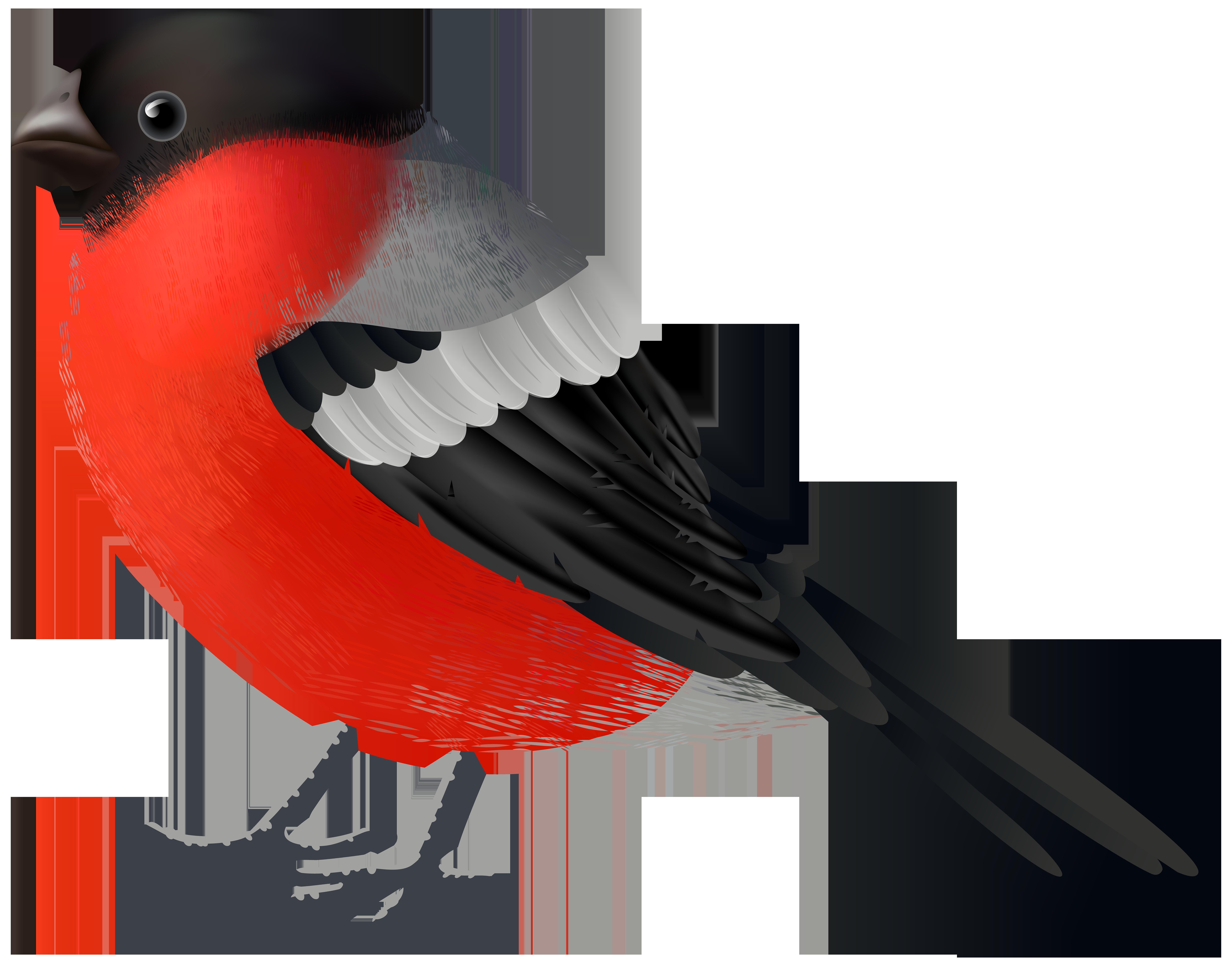 Red black bird png. Cardinal clipart transparent background