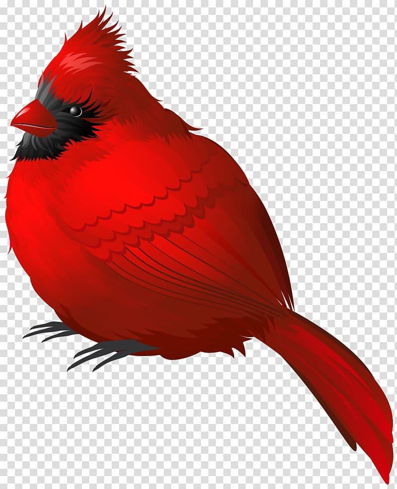 Cardinal clipart transparent background. Red bird winter