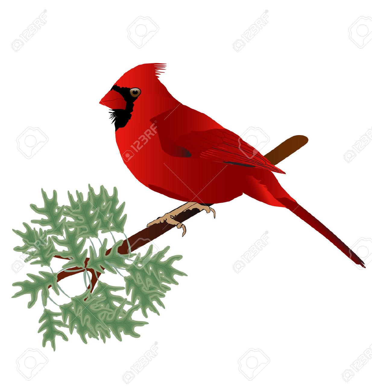 Cartoon free download best. Cardinal clipart tree clipart