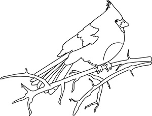 Cardinal clipart tree clipart. Image bird coloring page