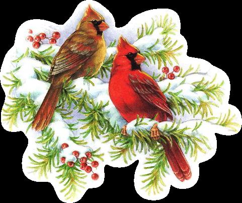 Cardinal clipart vintage. Christmas cardinals clip art