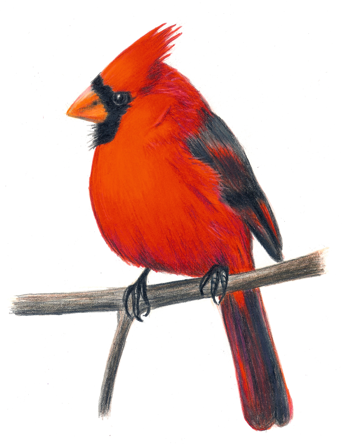 Cardinal clipart vintage. Christmas clip art library