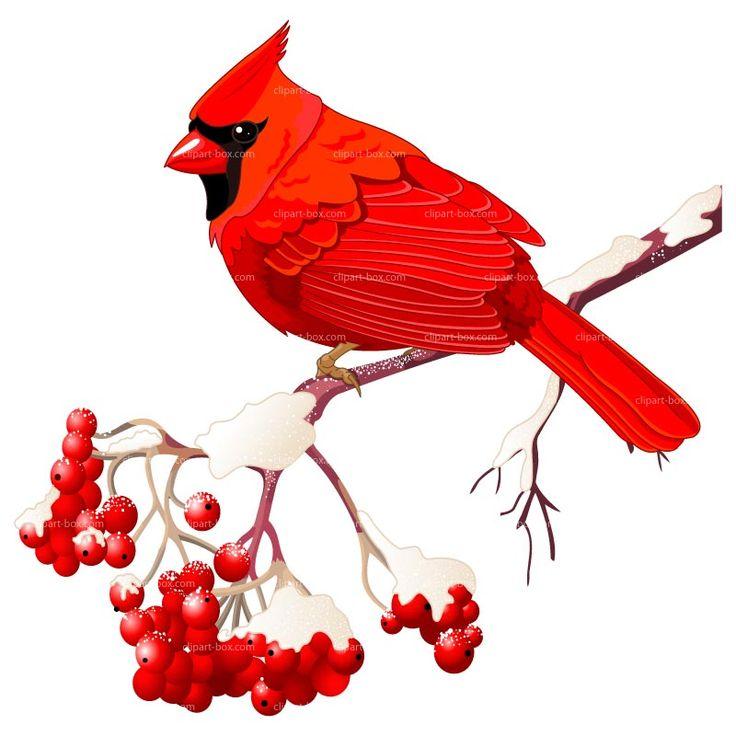 Cardinal clipart woodland bird. Winter cliparts zone
