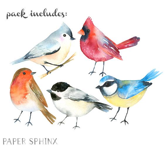 Watercolor birds winter animals. Cardinal clipart woodland bird