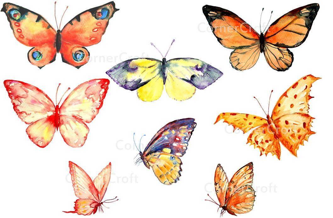 Cards clipart butterfly. Watercolor orange and