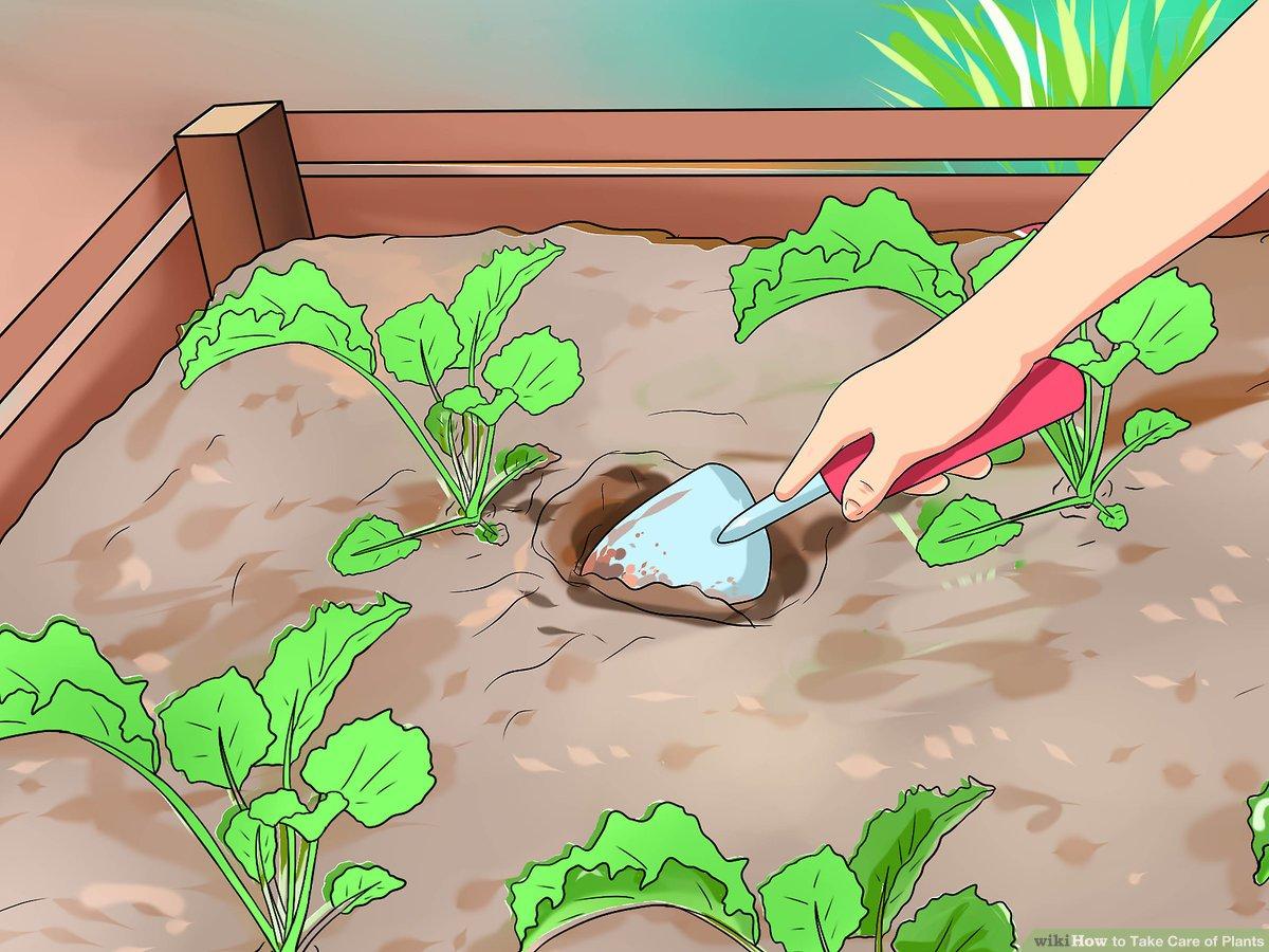 ways to take. Gardener clipart proper care plant