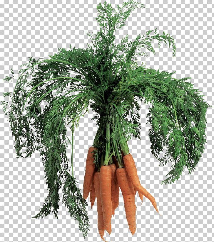 Carrot clipart carot. Png bikinibody business juice
