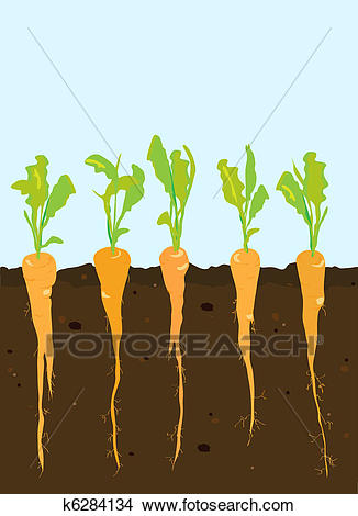 Carrot clipart carrot plant. Station