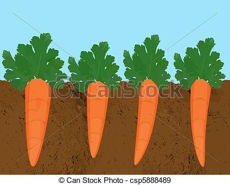 . Carrot clipart carrot plant