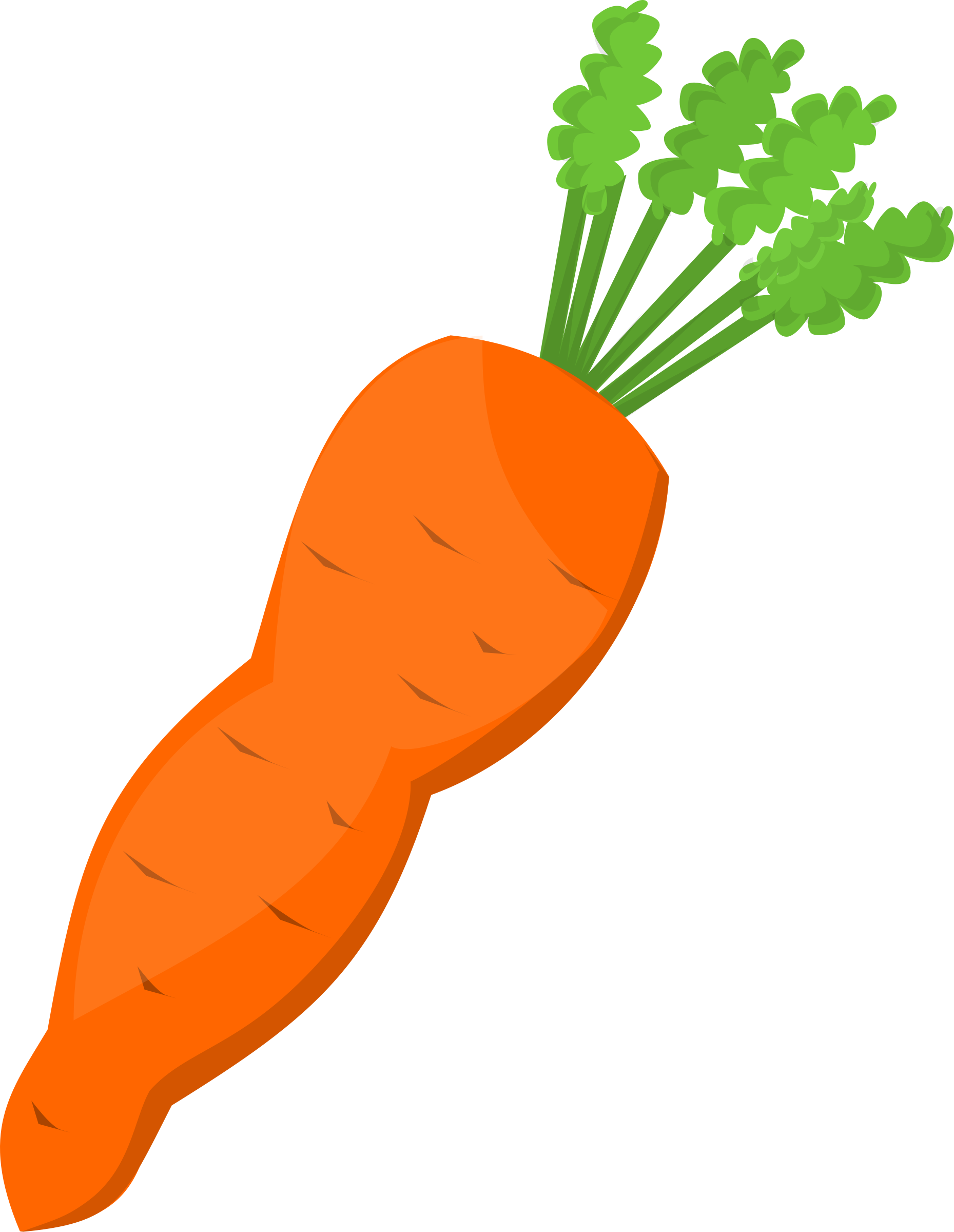 Carrot orange carrot