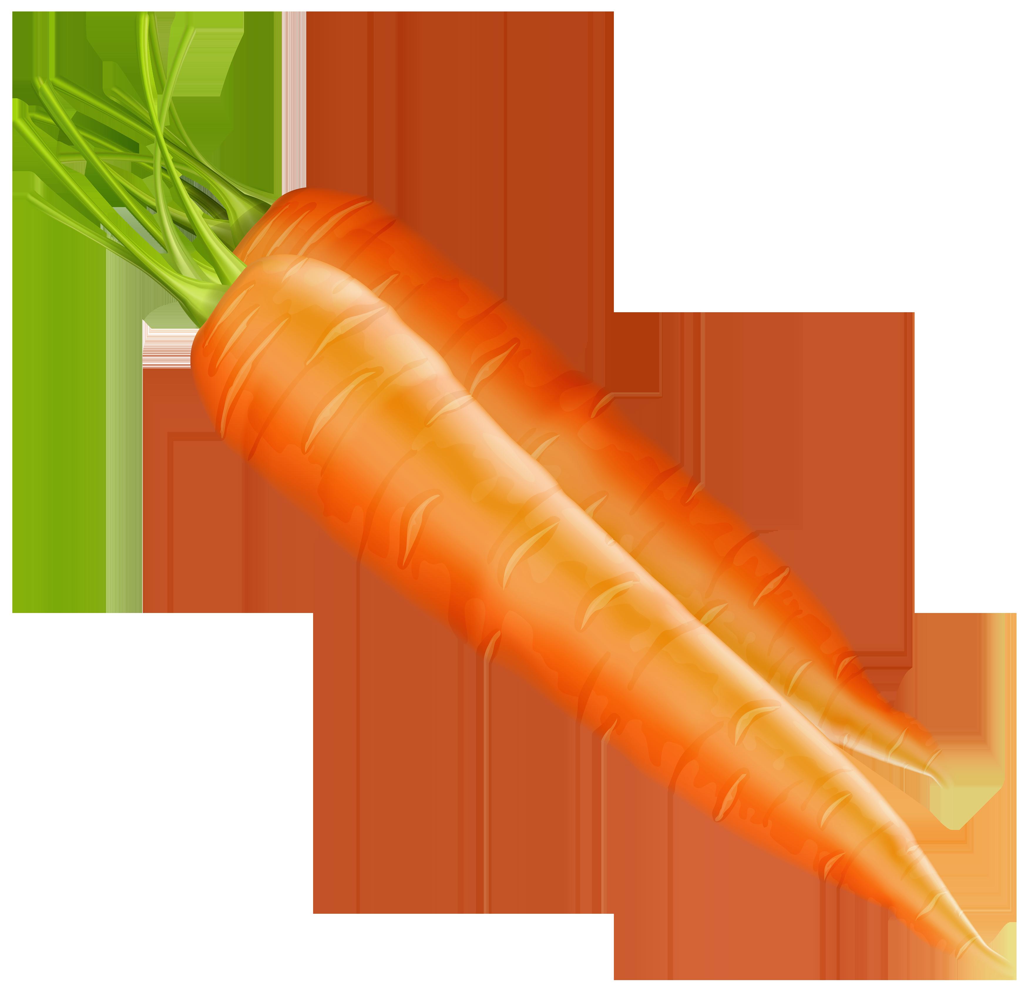 Clipart vegetables carrot. Carrots png best web