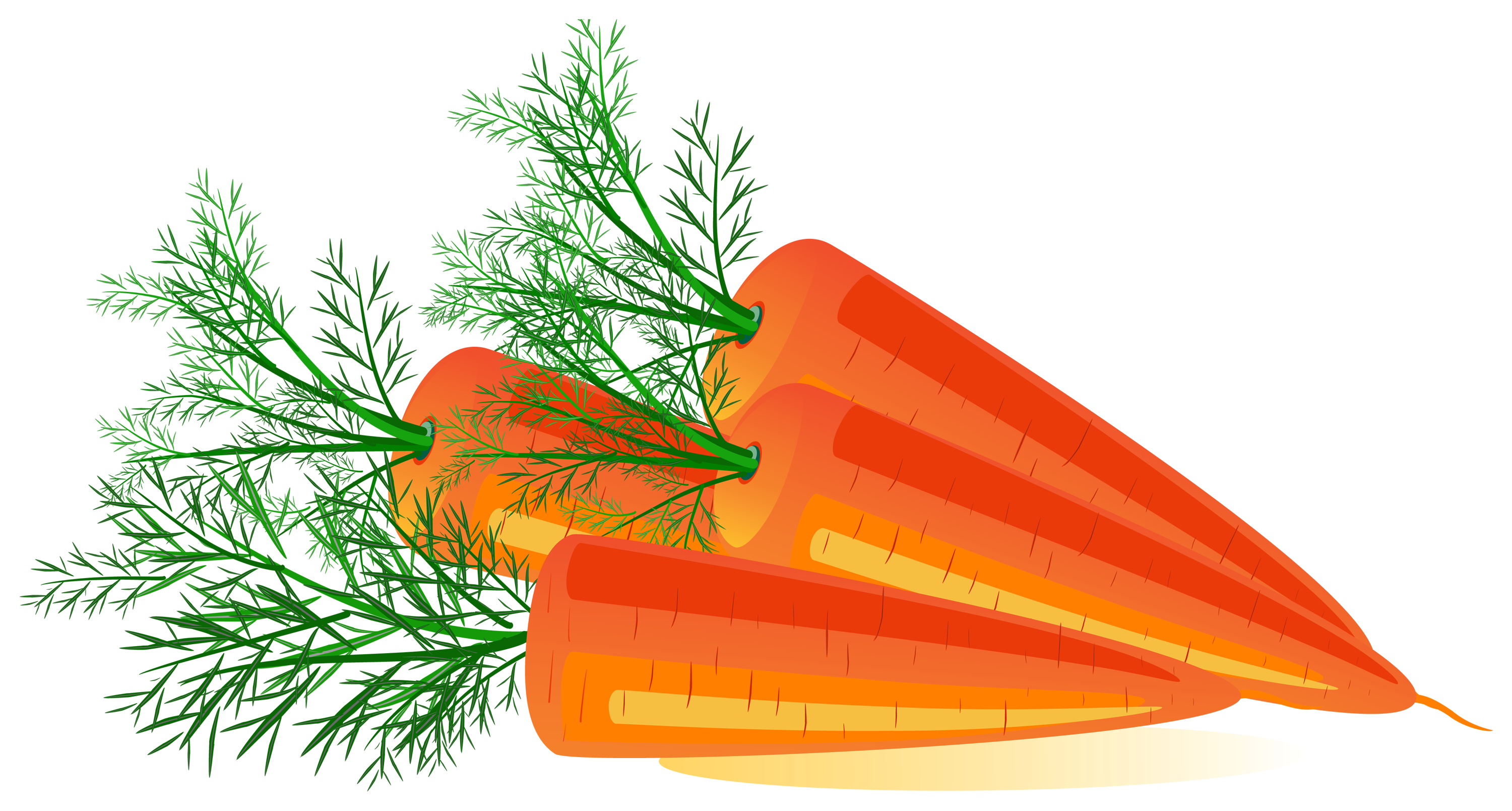 Image free download. Clipart png carrot