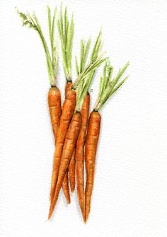 Free image carrots ephemera. Carrot clipart vintage