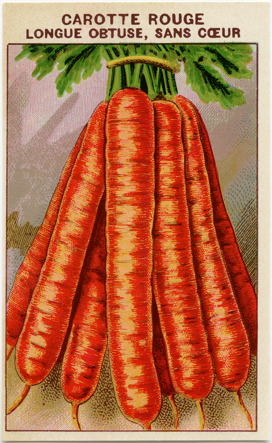 Carrot clipart vintage. Carrots french seed packet
