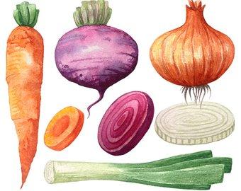 Carrot clipart watercolor. Etsy vegetable lettuce pepper