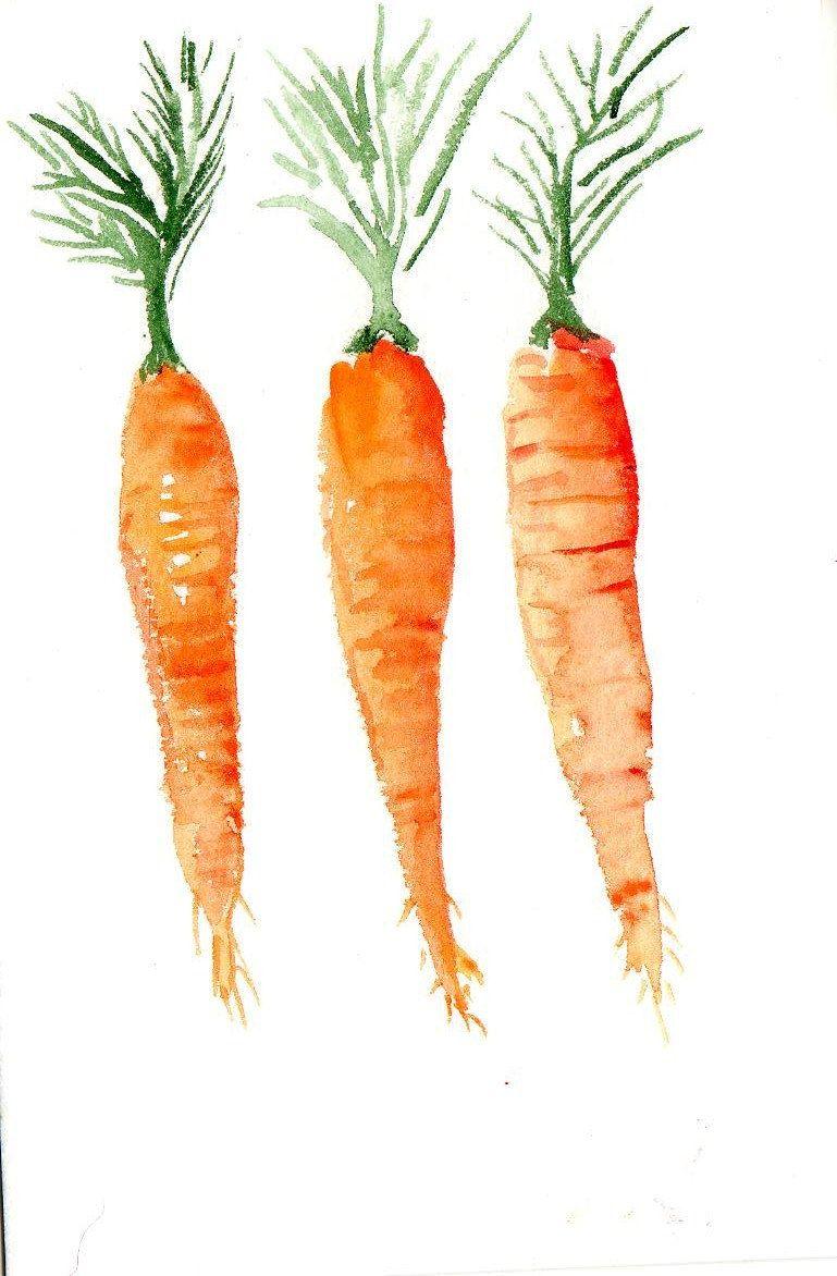 x original carrots. Carrot clipart watercolor
