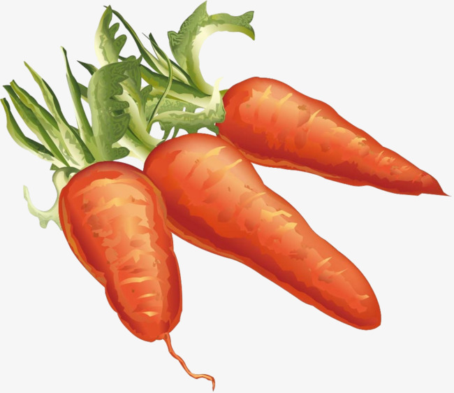 Vegetables delicious png image. Carrot clipart watercolor