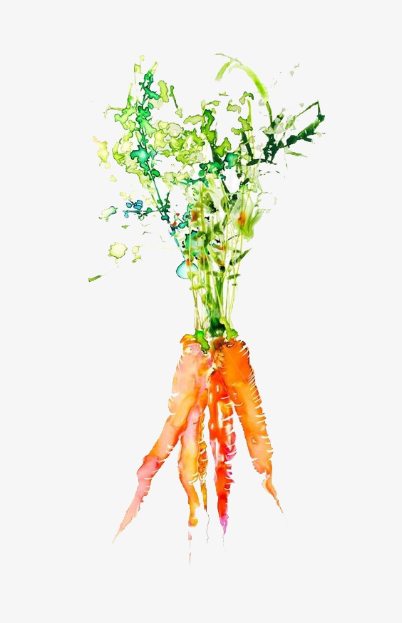 Carrot clipart watercolor. Vegetables png image and