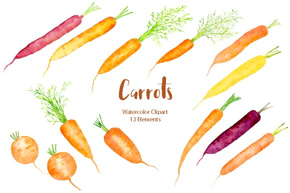 Carrot clipart watercolor. Illustration illustrations creative market