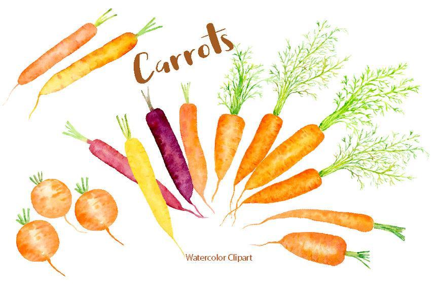Illustration rainbow carrots watercolour. Carrot clipart watercolor