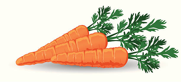 Station . Carrots clipart
