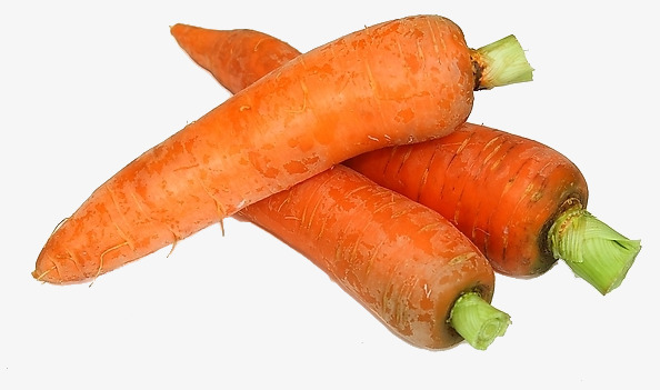 Carrot clipart bunch carrot. Three carrots of radish